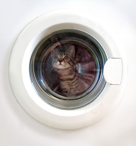 caturday un chaton survit un tour en machine laver geeksleague geeksleague. Black Bedroom Furniture Sets. Home Design Ideas