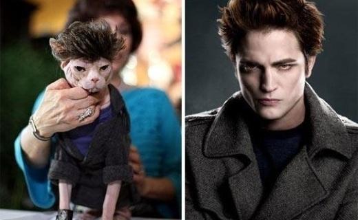 [Caturday] Twilight, c'est des connards.