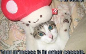 [Caturday] Les chats aussi jouent à Super Mario