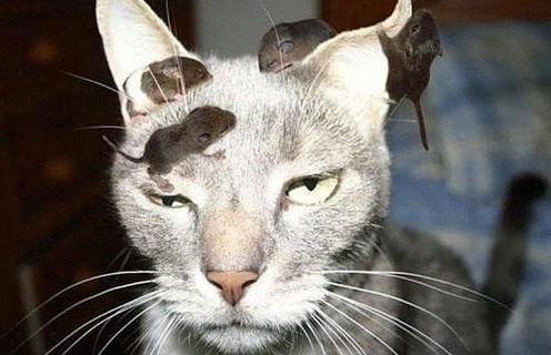 [Caturday] Les chats ne servent à rien.