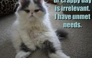 [Caturday] Les chats, c'est des connards.