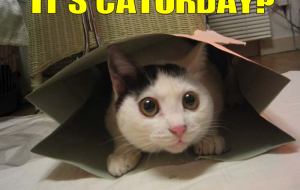It's caturday ?