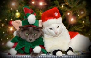 Caturday – Joyeux Noël
