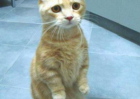 [img] C'est Caturday !