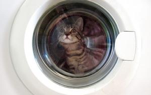 caturday un chaton survit un tour en machine laver. Black Bedroom Furniture Sets. Home Design Ideas