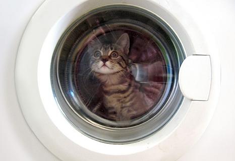 [Caturday] Un chaton survit à un tour en machine à laver