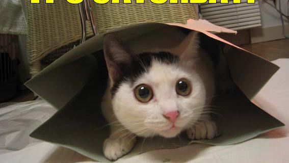 It's caturday ?