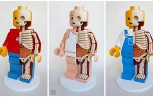 Squelette et anatomie de nos amis d'enfance